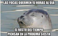 Enlace a Quiero ser una foca