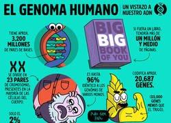 Enlace a Explicación del genoma humano