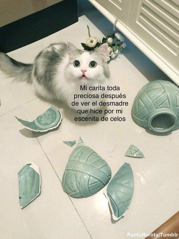 Meme_otros - Los gatos saben dar lo mejor de sí cuando la lían