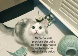 Enlace a Los gatos saben dar lo mejor de sí cuando la lían
