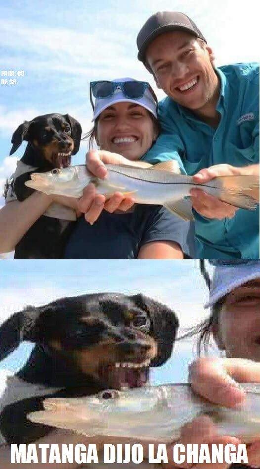Meme_otros - Dame el pescado..