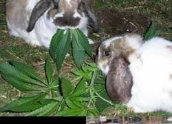 Enlace a Cuidado qué das de comer a tu conejo