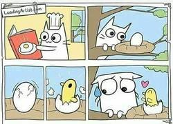 Enlace a Las prioridades de un gato