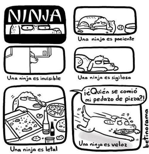 Otros - Las habilidades de un ninja peludo