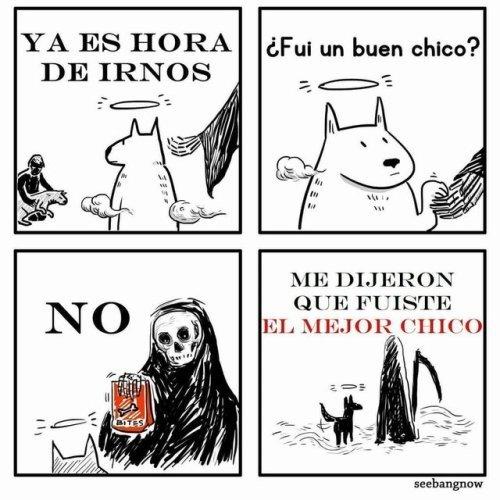 Otros - Un perro siempre es EL MEJOR CHICO