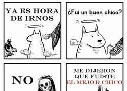 Enlace a Un perro siempre es EL MEJOR CHICO