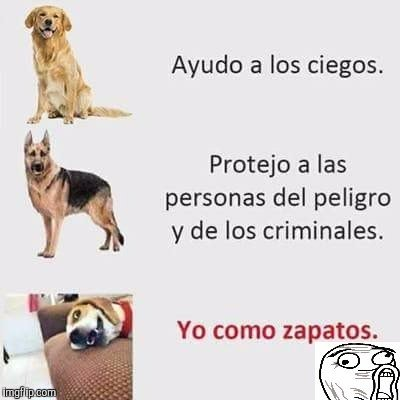 Meme_otros - Diferentes perros
