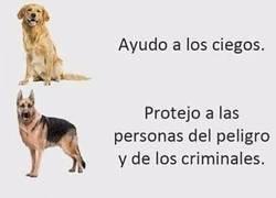 Enlace a Diferentes perros