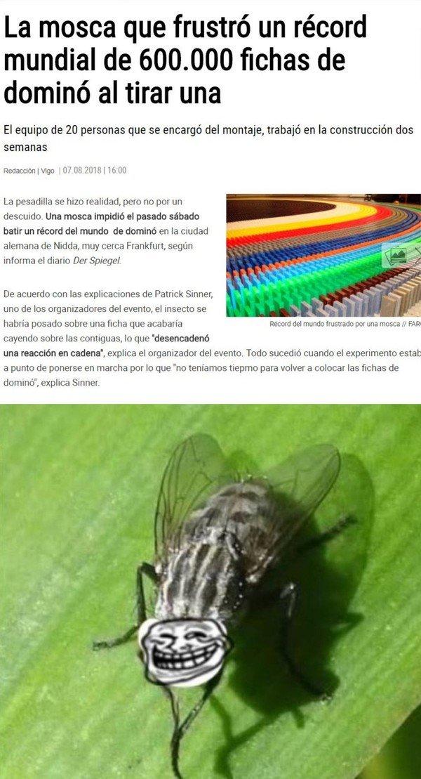 Otros - La mosca más troll del mundo