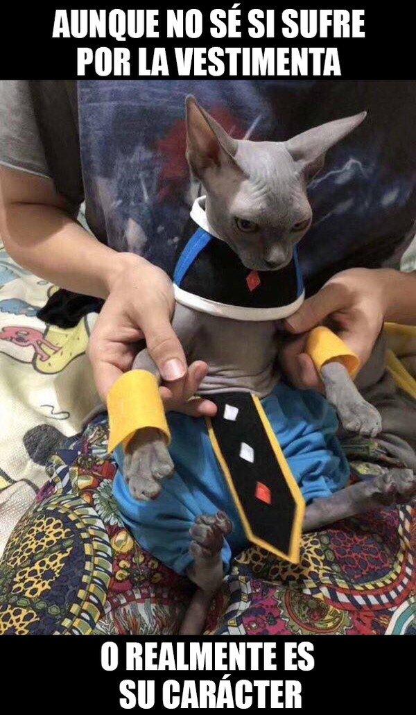 Meme_otros - El disfraz perfecto para mi gato