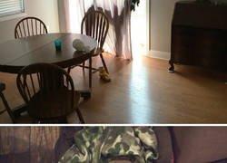 Enlace a Perros intentando camuflarse en casa (y ellos creen que no les vemos)
