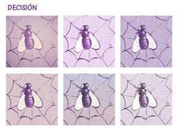 Enlace a Una decisión que las arañas tampoco tienen fácil