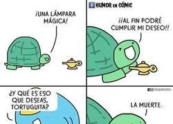 Enlace a El deseo de una tortuga