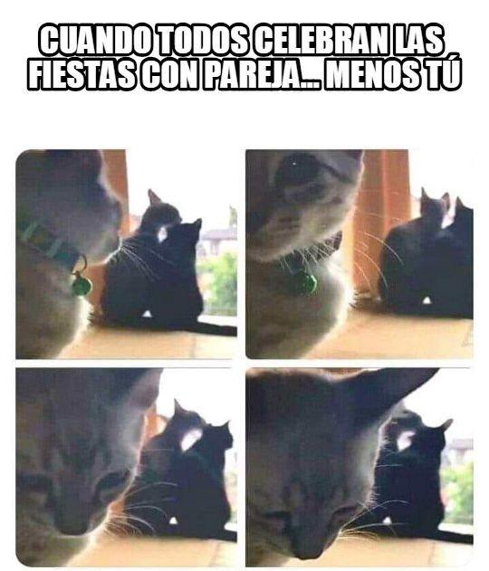 La_cara_que_pones_cuando - El gato forever alone