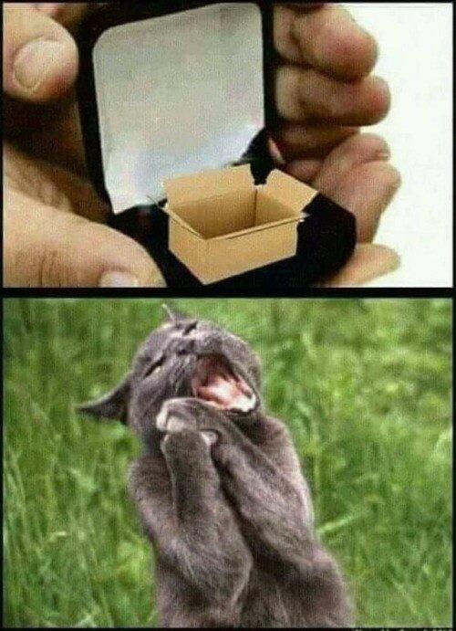 Meme_otros - El mejor regalo para un gato