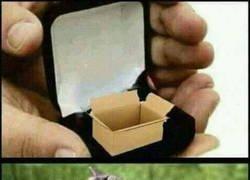 Enlace a El mejor regalo para un gato