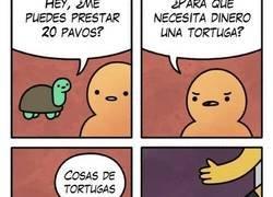 Enlace a Las tortugas tienen sus aficiones