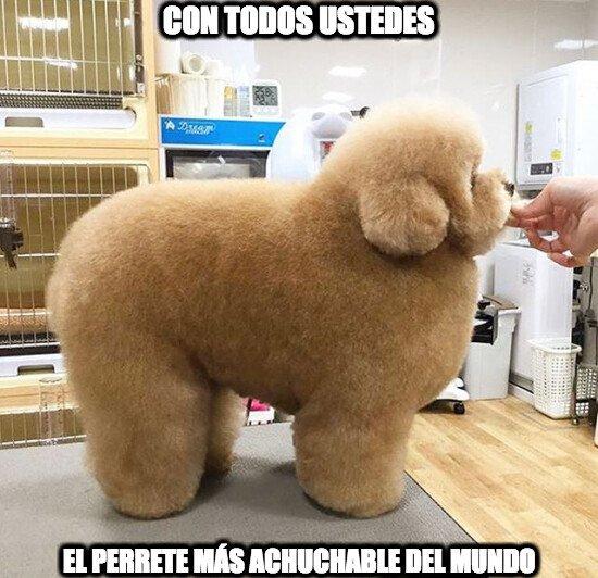 Meme_otros - Necesito abrazarle ya :(