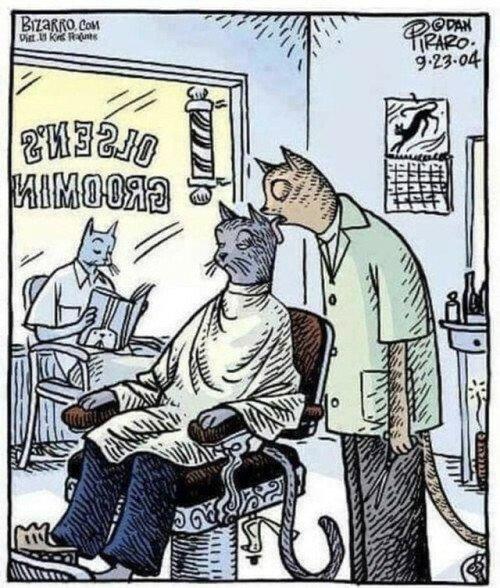 Otros - La peluquería de los gatos