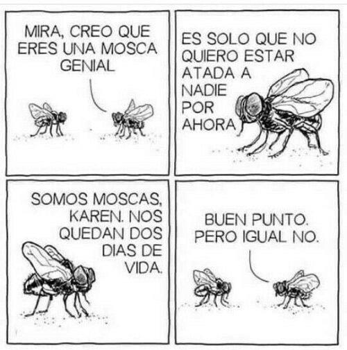 Otros - No todos los hombres mosca son iguales