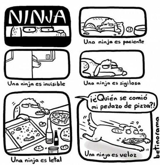 Otros - Los perros y los ninjas separados al nacer