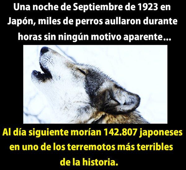 Meme_otros - Los perros que predijeron el futuro