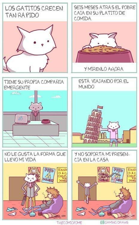 Otros - La vida de los gatos pasa demasiado rápido