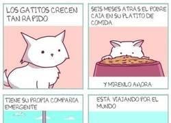Enlace a La vida de los gatos pasa demasiado rápido