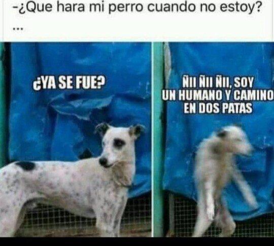 Meme_otros - Los perros son unos cachondos