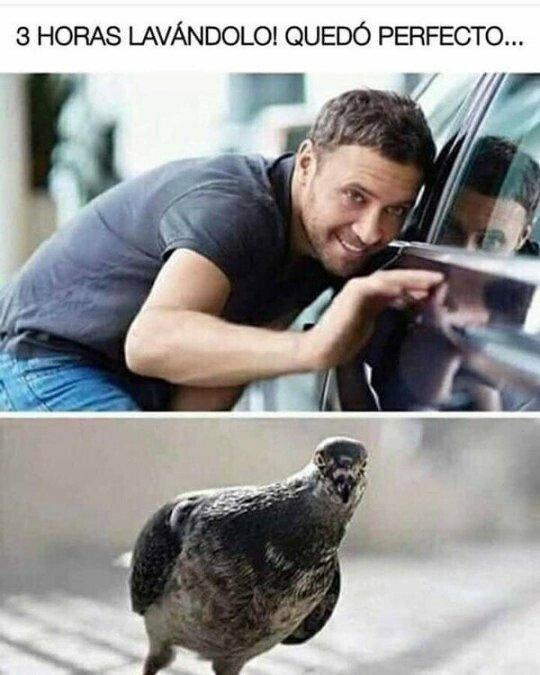 Meme_otros - Las palomas siempre al acecho