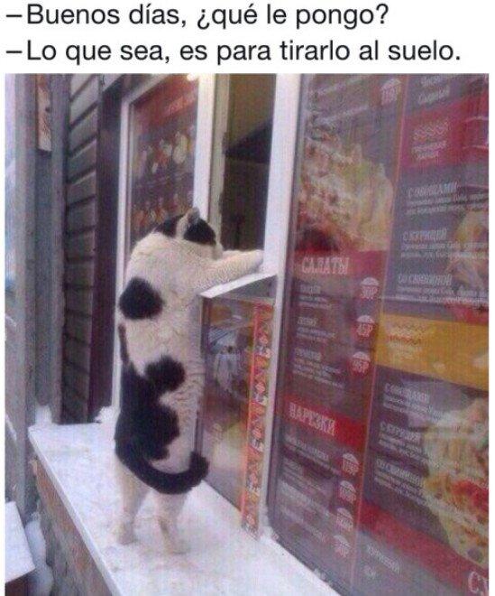 Meme_otros - El objetivo de los gatos es claro
