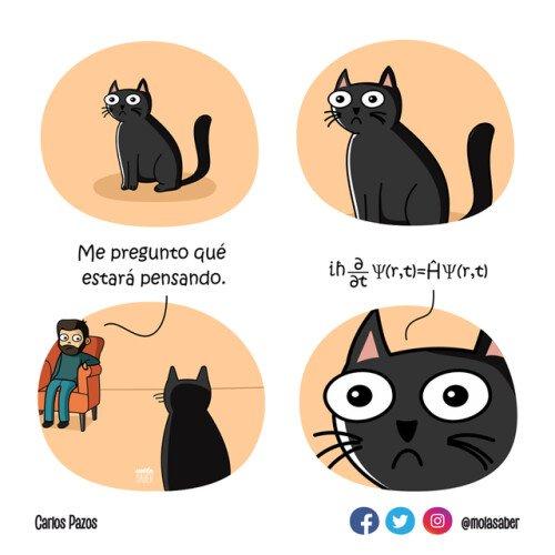 Otros - Nunca subestimes a un gato