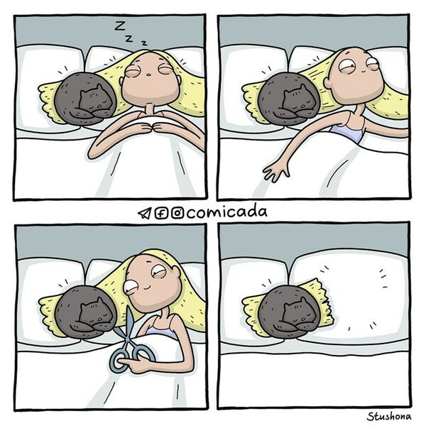 Otros - Lo mejor que puedes hacer ante un gato así