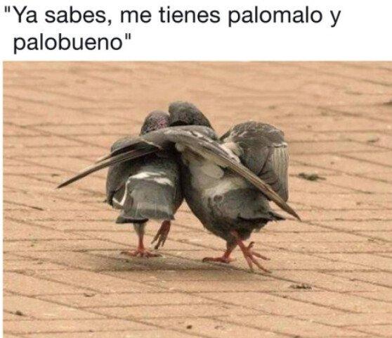 Meme_otros - Cosas de palomas