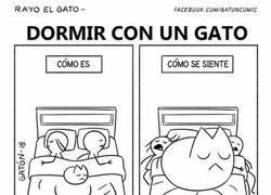 Enlace a Dormir con un gato en la cama