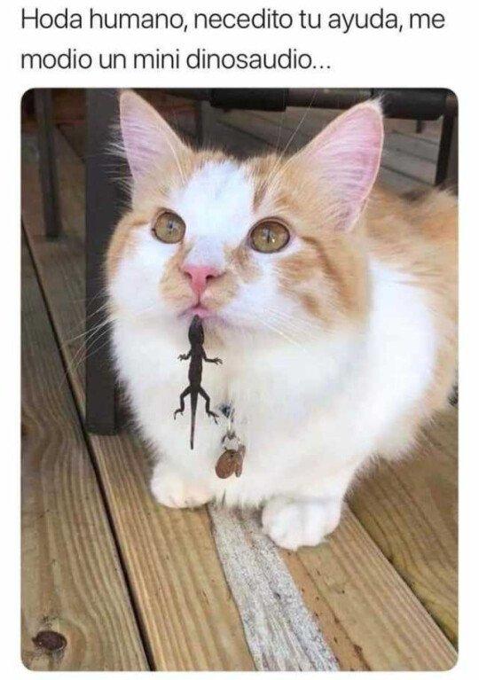 Meme_otros - El gato está en peligro