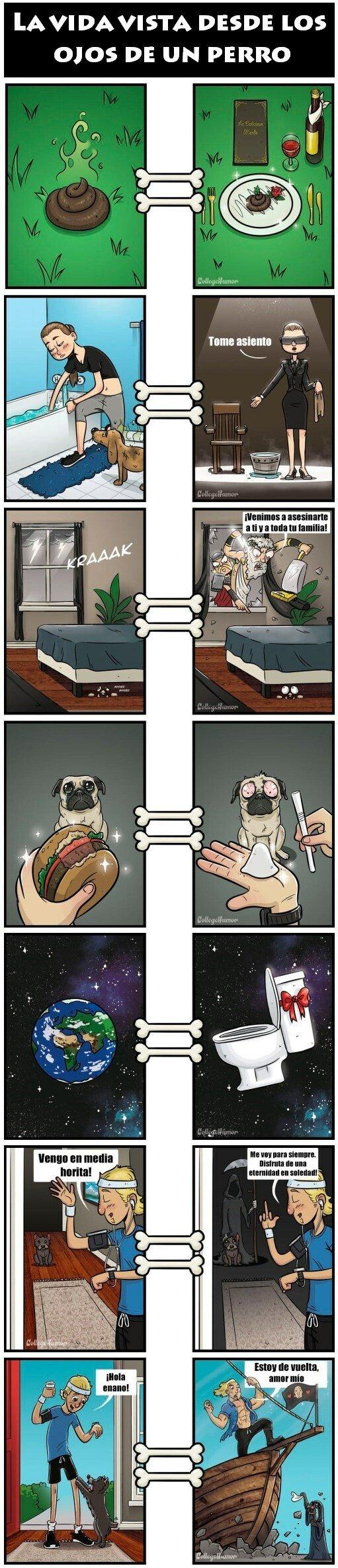 Otros - Los perros ven las cosas muy diferentes