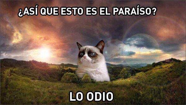 Meme_otros - RIP Grumpy Cat...