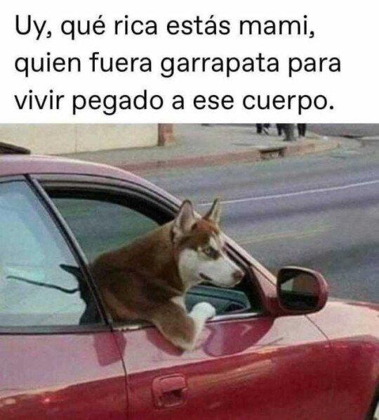 Meme_otros - Si los perros piropeasen como algunos