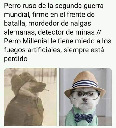 Meme_otros - Perros antes vs perros ahora