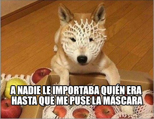Meme_otros - Doggo justiciero