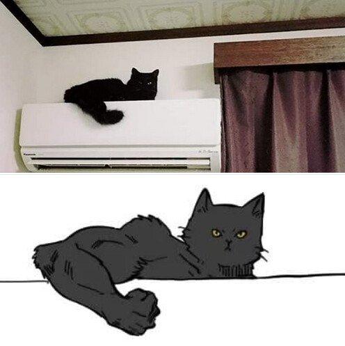 Meme_otros - Me gusta más cómo veo a mi gato que cómo es