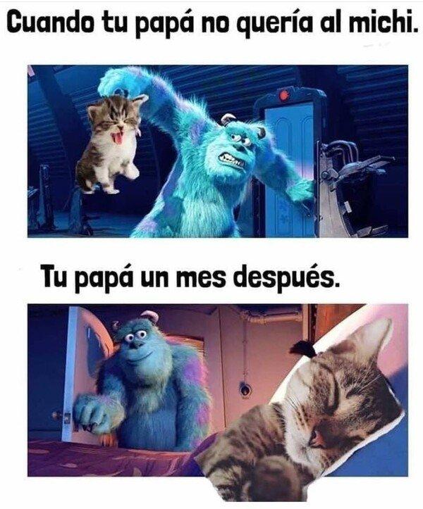 Meme_otros - A los papás siempre les pasa igual con los gaticos