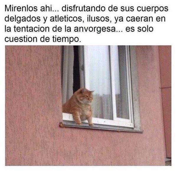 Meme_otros - Siempre anvorguesa, nunca invorguesa