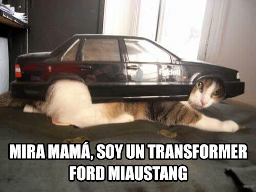 Meme_otros - Ford Miaustang