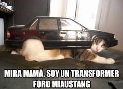 Enlace a Ford Miaustang