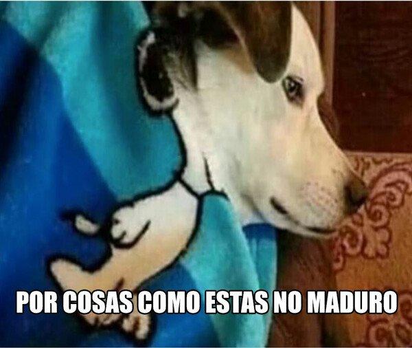 Meme_otros - Snoopy, is dat u?