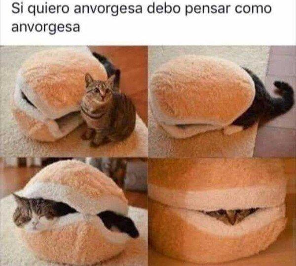Meme_otros - Yo quiero ser un gato anvorguesa