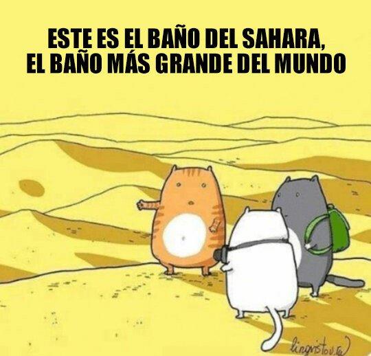 Meme_otros - El baño del Sahara