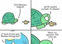 Enlace a Deseos de tortuga